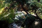 De japanske haver,red.